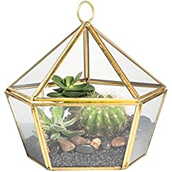 NCYP Modern Brass Copper Clear Glass Jewel-Boxed Pentagon Shape Geometric Terrarium Succulent Planter Pot Closed Plant Moss Fern Geo Container Wedding Decor Box with Swing Lid Gold