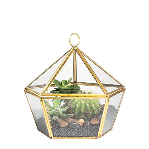 NCYP Modern Artistic Brass Copper Clear Glass Jewel-boxed Pentagon Shape Glass Geometric Terrarium Succulent Planter Closed Plant Container Moss Fern Geo Box with Swing Lid Gold by NCYP