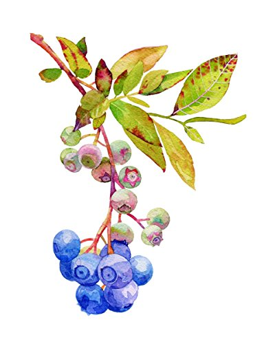 Blueberries Watercolor Print Kitchen Artwork Home Blueberry Decoration Poster Size (11x17)