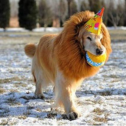 8Eninine Disfraz de Halloween Traje de Perro Mascota Pelucas de león con Orejas Accesorios para el