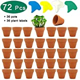 36 Pcs Small Mini Clay Pots, PETUOL 2inch Tiny Terracotta Pots Clay Ceramic Pottery Planter Cactus Flower Pots Succulent Nursery Pots - Great for Indoor/Outdoor Plants, Crafts, Wedding Favor