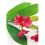 Afloral-Real-Touch-Tropical-Frangipani-in-Dark-Pink-22-Tall
