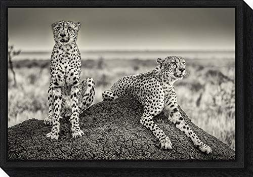 Savannah Poster Bed - Amanti Art Two Cheetahs Watching Out by Henrike Scheid Canvas Art Framed, Small, Black