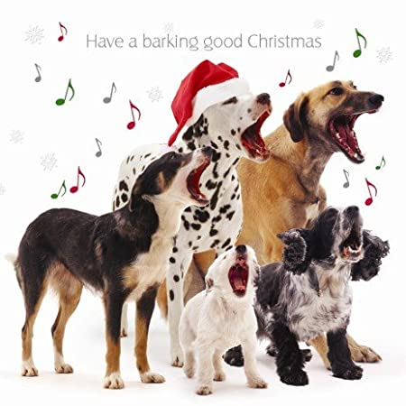 barking good christmas mixed dogs christmas cards pack