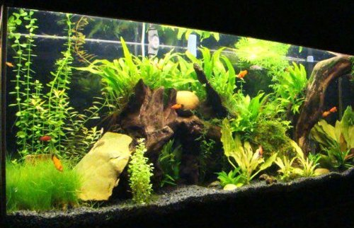 50 Tropical Live water Fish plants