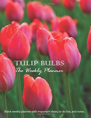 Tulip Bulbs: Large 8.5