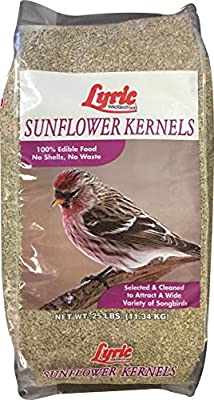 Lyric Sunflower Kernels