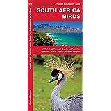 South Africa Birds (Pocket Naturalist Guide)