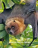 2020 Weekly and Monthly Planner: Black Bat - Monthly Calendar with U.S./UK/ Canadian/Christian/Jewish/Muslim Holidays- Calendar in Review/Notes 8 x 10 in.-Wildlife Animals Nature