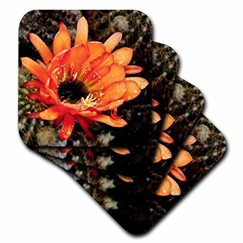 3dRose cst_32390_2 Decorative Colorful Garden Botanic Classic Plant SW Southwest Desert Cactus Red Orange Rain Flower Soft Coasters, Set of 8 by 3dRose