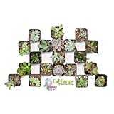 CAL Farms 2'' Beautiful Assorted Variety Succulents for Weddings or Party Favors or Succulent Gardens (Pack of 20)