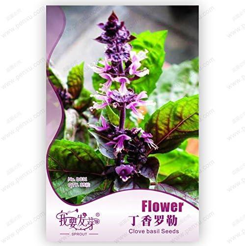 Paquete original de 35 semillas / pack, semillas de clavo de olor de la albahaca, albahaca, plantas bonsai jardín semillas de flores, plantas bonsai Balcón: Amazon.es: Jardín