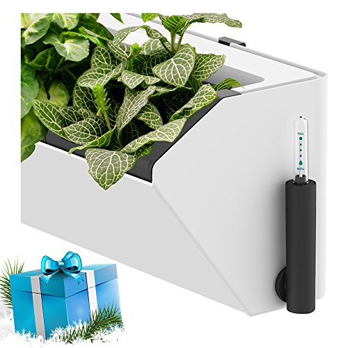 tomato watering system - 9