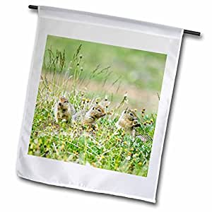 Danita Delimont - Wildlife - Arctic Ground Squirrel wildlife, Arctic NWR, Alaska - US02 JGS0200 - Jim Goldstein - 12 x 18 inch Garden Flag (fl_87559_1)