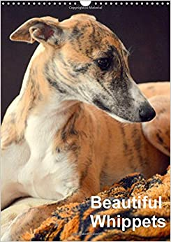 Beautiful Whippets 2018: Whippets are Small English Sighthounds (Calvendo Animals)