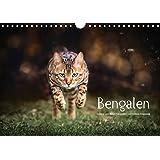Bengalen Outdoor und Action (Wandkalender 2018 DIN A4 quer): Bengalen, die kleinen Leoparden in freier Natur (Monatskalender, 14 Seiten ) (CALVENDO Tiere)