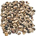 Decorative Rocks, Pebbles, 5 Cups (1.25 quarts) Small, Outdoor Stones, Natural River Gravel, Area Coverage of About 12 X 12 inch. For Vase Fillers, Succulent, Tillandsia, Cactus Pot, Terrarium Plants