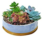 STAR-TOP Succulent Planter Pot,Small Modern Decorative Ceramic cement Flower Plant Pot with Drainage - Home Office Desk Garden Mini Cactus Pot Indoor Decoration (Blue Marble pot)