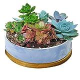 STAR-TOP Succulent Planter Pot,Small Modern Decorative Ceramic Cement Flower Plant Pot Drainage - Home Office Desk Garden Mini Cactus Pot Indoor Decoration (Blue Marble Pot)