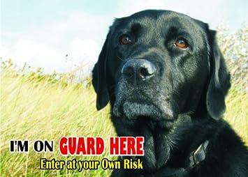 Amazon.com: Atención – cuidado perro de agua/Fun Sign de San ...
