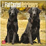Flat-Coated Retrievers Calendar (Multilingual Edition)