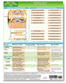 MemoCharts Pharmacology: Inotropic drugs (Review chart) (Paperback)
