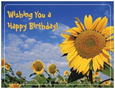 sunflower happy birthday Amazon.com: Sunflower Happy Birthday Cards and Refrigerator Mag sunflower happy birthday