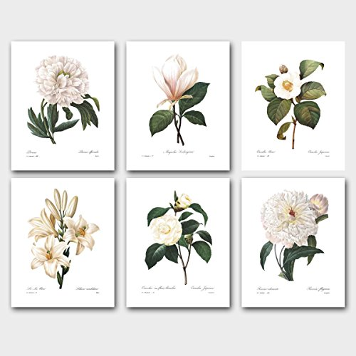 set-of-6-botanical-prints-redoute-art-white-flower-room-decor-lily-camellia-peony-magnolia-unframed