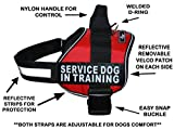 Servcie Dog in Training Nylon Dog Vest Harness. Purchase Comes with 2 Reflective Service Dog in Training pathces. Please Measure Your Dog Before Ordering (Girth 30-42'', Red)