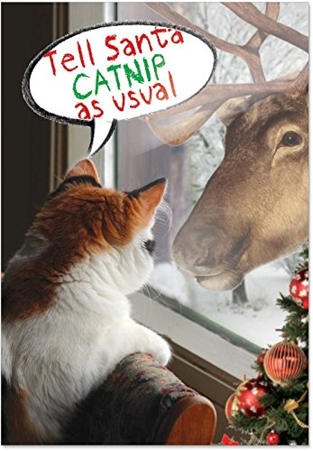 12 Boxed 'I Want Catnip' Christmas Cards with Envelopes 4.63 x 6.75 inch, Cute Kitty Cat and Reindeer Holiday Notes, Happy Holidays with Humorous Silly Kitten Christmas Cards B1930