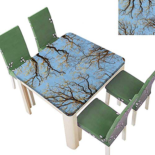 Printsonne Decorative Tablecloth Crown of Trees Under Vibrant Sky Twig Birch Tranquil Air Radial for Dining Room and Party 52 x 52 Inch