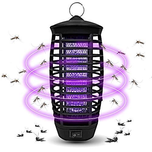 Wanqueen Fruit Fly Bug