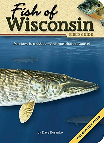 Fish of Wisconsin Field Guide (Fish Identification Guides) (Best Freshwater Fish For Beginners)