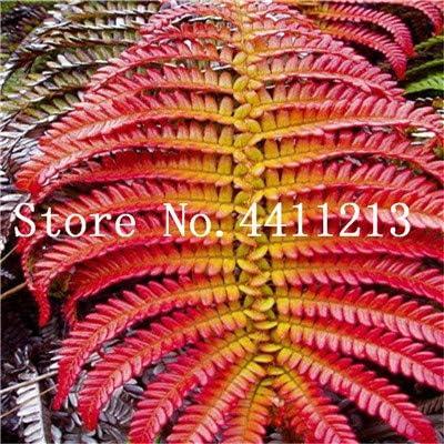 Bloom Green Co. Bonsai 100 Unids Raras Bonsai Colores Mezclados Helecho Plantas de Hierbas Perennes Bonsai Maceta Planta de Interior Para Huerto Fácil Crecer: 6