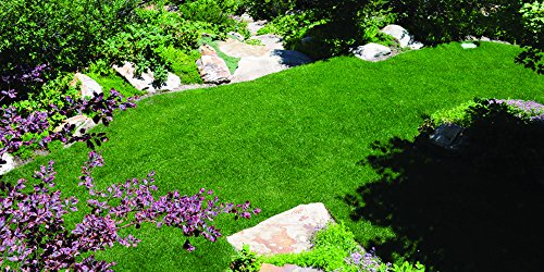 Kentucky Bluegrass Seed: Blue Ribbon Blend (1000 sq ft) by Nature's Seed