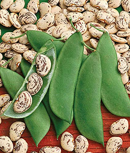 - 100 Seeds Jackson Wonder Lima Bean