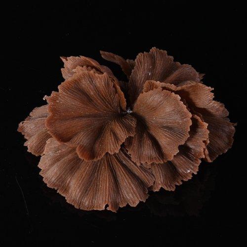 Coral Planta Artificial Decoración para Acuario Pecera Peces Color Café 13CM: Amazon.es: Hogar