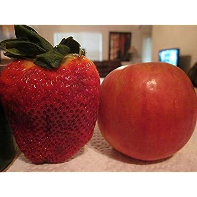 HOTUEEN 100 Seeds Garden Fruit Plant Delicious Giant Maximus Strawberry Seeds Fruits : Garden & Outdoor