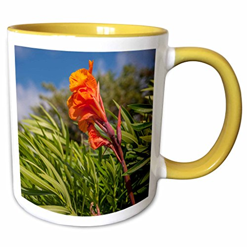 3dRose Danita Delimont - Flowers - Dominican Republic, Punta Cana, Flower - CA14 LEN0288 - Lisa S. Engelbrecht - 15oz Two-Tone Yellow Mug -