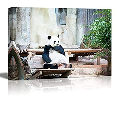 Canvas Prints Wall Art - Cute Panda Bear Sitting on a Wood Chair | Modern Home Deoration/Wall Art Giclee Printing Wrapped Canvas Art Ready to Hang - 32