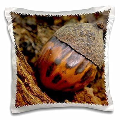 "3dRose pc_90429_1 Acorn, First Creek Trail, Mammoth Cave NP, Kentucky-US18 RKL0025-Raymond Klass-Pillow Case, 16 by 16"""