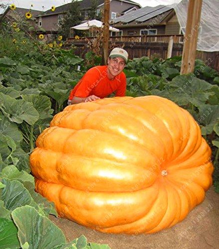 Pianta Di Zucca Di Halloween.20pcs Semi Di Zucca Gigante Di Halloween Semi Di Zucca Verdure