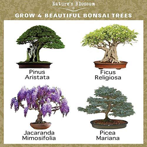 Bonsai Tree Care Ice Cubes Bonsai Tree