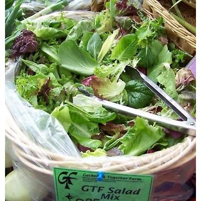 lettuce, GOURMET LETTUCE salad greens MIX, 1000 seeds! : Garden & Outdoor