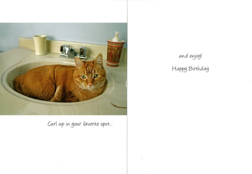 FUNNY 100 BIRTHDAY CARDS BEST BULK BUY VALUE ANIMAL AND CAT THEMED GREETING CARDS {jg}