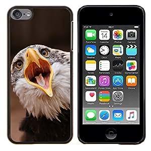 Qstar Arte & diseño plástico duro Fundas Cover Cubre Hard Case Cover para Apple iPod Touch 6 6th Touch6 (Boca grande Águila)