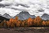 Grand Teton Art Print - Modern Home Decor - Black and White Photograph Wyoming Nature Print Mt. Moran