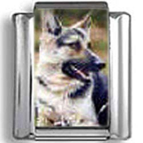 German Shepherd Dog Photo Italian Charm