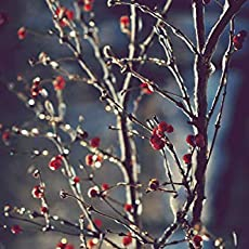 Amazon Com Red Berries Winter Photograph Fine Art Nature