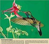 Garden Birds 2017 Wall Calendar - Backyard Song Birds 18.5 x 10.5 (Open)